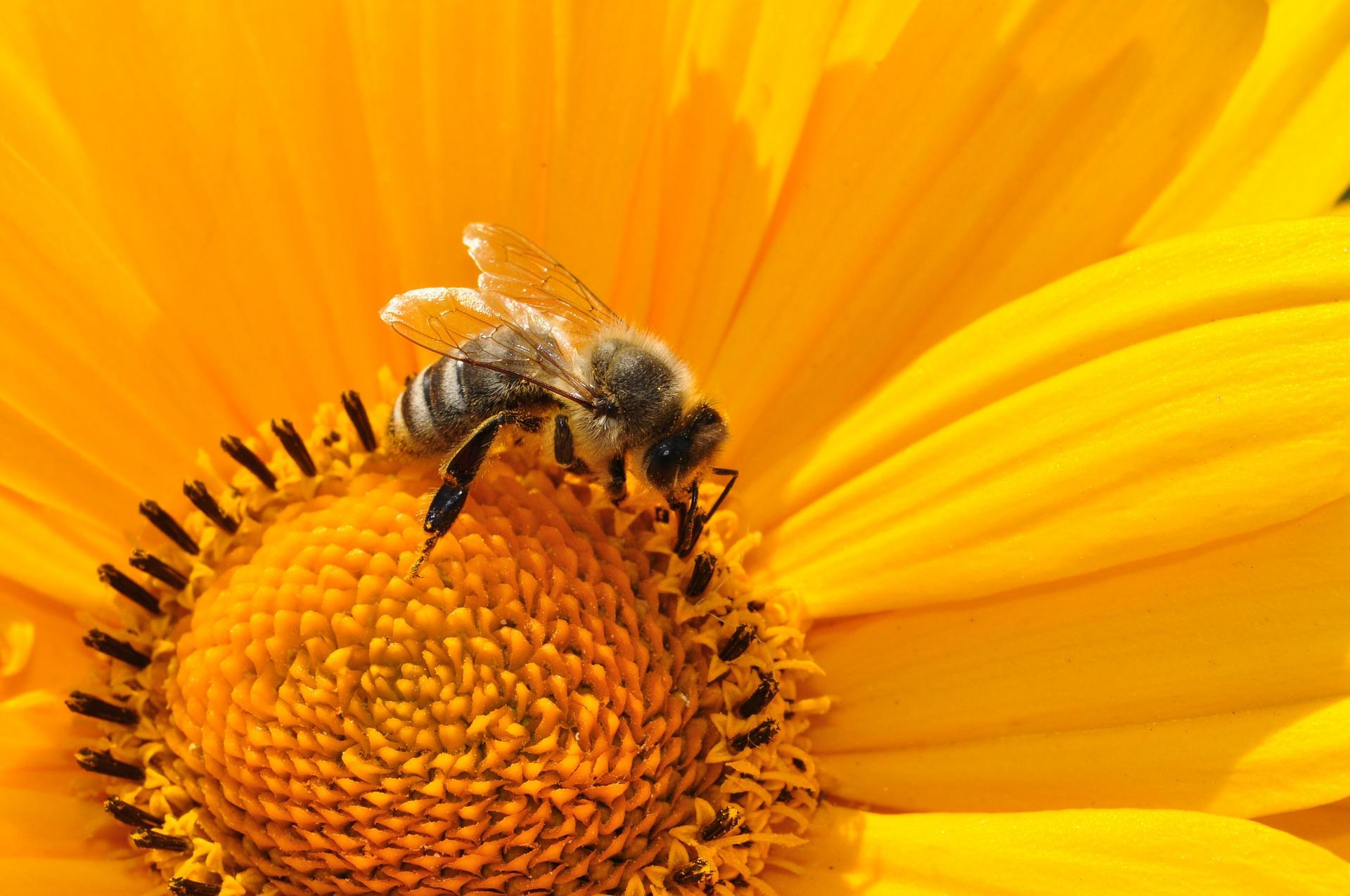 Czynna ochrona pszczołowatych w parkach krajobrazowych